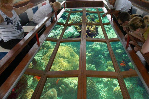 Glass Bottom Boat Excursion in Hurghada